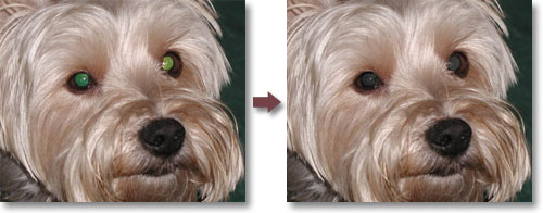 Pet Eye Pilot - pet eye color correction